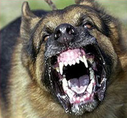 Electronic Barking Dog Alarm